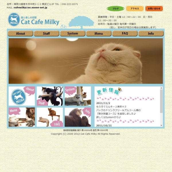 Cat Cafe Milky